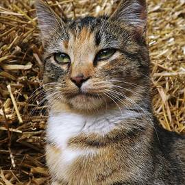 Gerald Strine - The Barn Cat
