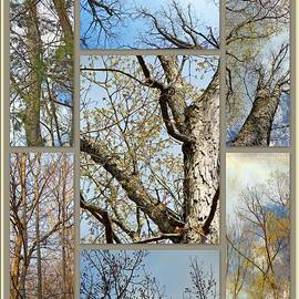 Mother Nature - The Beautiful Bones of Trees