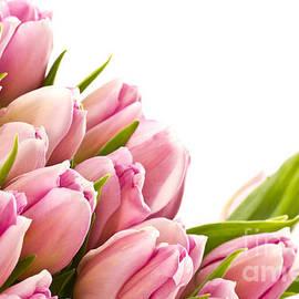 Boon Mee - The Beautiful Purple Tulips