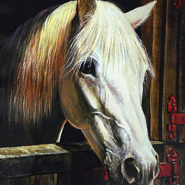Sandi OReilly - The Beauty Of A White Horse