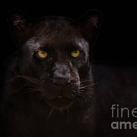 Ashley Vincent - The Beauty of Black