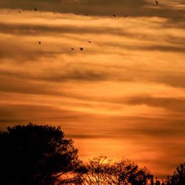 Christy Usilton - The Birds Still Fly