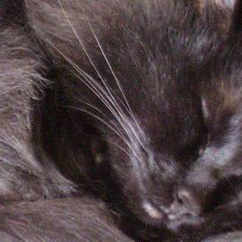 Yvette Pichette - The Black Cat