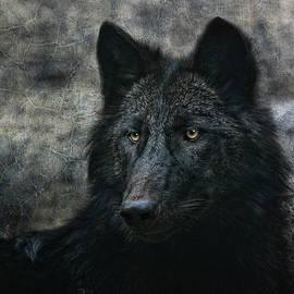 Joachim G Pinkawa - The Black Wolf