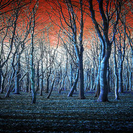 Neil Hemsley - The Blue Forest
