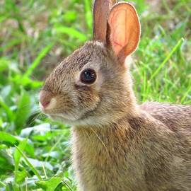 Lori Frisch - The Bunny