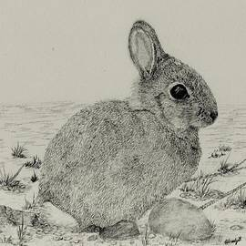 Wendy Brunell - The Bunny