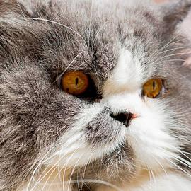 Daniel Precht - The Cat