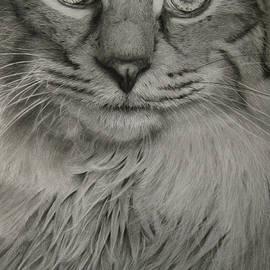 Giorgio  Smiroldo - The Cat