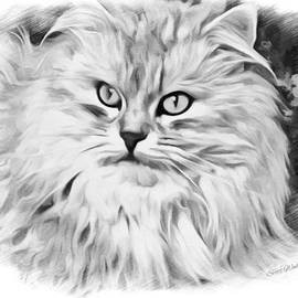 Scott Wallace - The Cats Meow Sketch