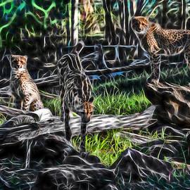 Miroslava Jurcik - The Cheetah Dubbo Zoo family