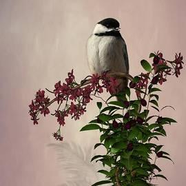 Davandra Cribbie - The Chickadee