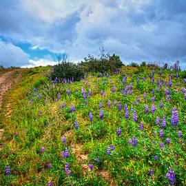 Lynn Bauer - The Climb Up Lupine Hill