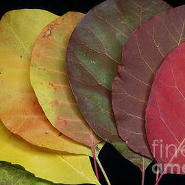 Stela Taneva - The colours of nature
