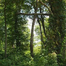 Diannah Lynch - The Cross Romans  8  32