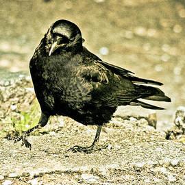 Eti Reid - The crow-vintage