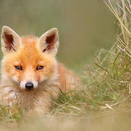 Roeselien Raimond - The Cute Kit