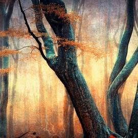 Lars Van de Goor - The Dancing Trees