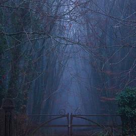 Fergal Gleeson - The Dark Woods