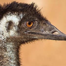 Mr Bennett Kent - The day I met an Emu