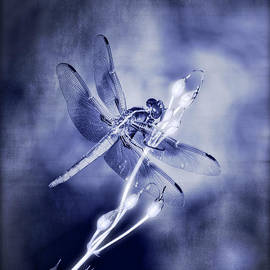 Saija  Lehtonen - The Dragonfly