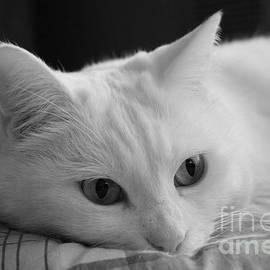 Donato Iannuzzi - The Dreamer Cat