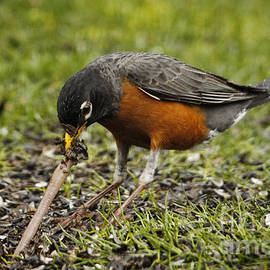 Inge Riis McDonald - The Early Bird
