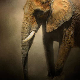 Jai Johnson - The Elephant Emerges