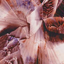 Ana Lusi - The enchanted coral