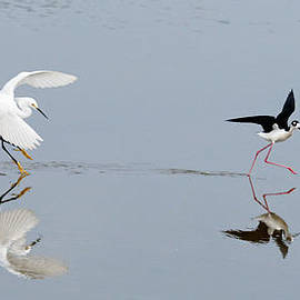 Dawn Currie - The Encounter