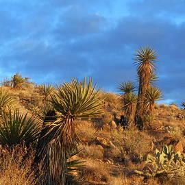 James Welch - The Endangered Arizona Landscape