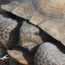 James Welch - The Endangered Desert Tortoise