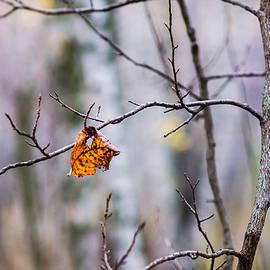 Alexander Senin - The Essence Of Autumn - Featured 3