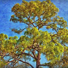 Hanny Heim - The Pine Tree