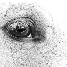 Jennie Marie Schell - The Eye of the Horse Black and White