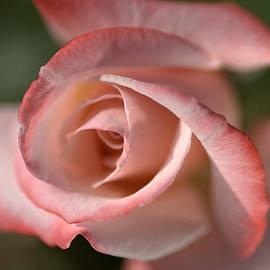 Joy Watson - The Eye Of The Rose