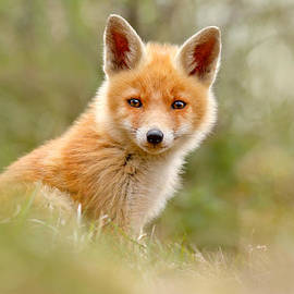 Roeselien Raimond - The Face of Innocence _ Red Fox Kit