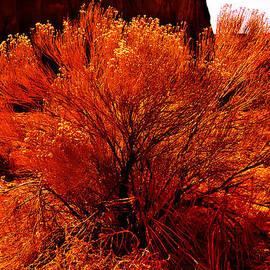 Bob and Nadine Johnston - The Flaming Bush