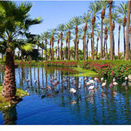 Tina M Wenger - The flamingoes of Palm Springs