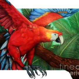 Derrick Rathgeber - The Flight of the Macaw