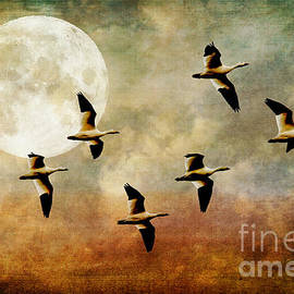 Lois Bryan - The Flight Of The Snow Geese