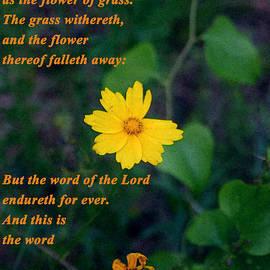 Nina Fosdick - The flower thereof falleth away