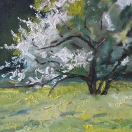 Francois Fournier - The Flowering Apple Tree no.1