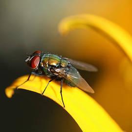 Trina  Ansel - The Fly