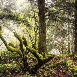 Debra and Dave Vanderlaan - The Forest