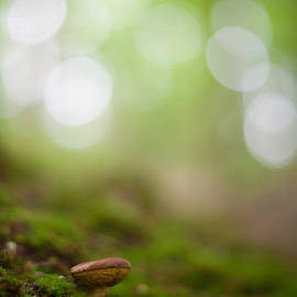 Mike Potts Photography - The Forest Floor