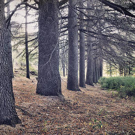 Guido Montanes Castillo - The Forest Of A Thousand Stories