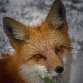Ernie Echols - The Fox 4 Digital Art