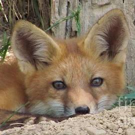 Laurinda Bowling - The Fox