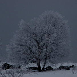 Francois Fournier - The Frosted Tree Quebec Canada